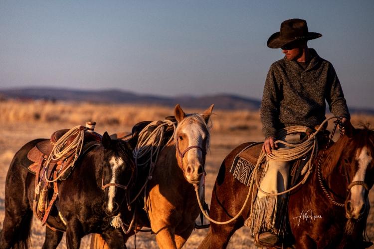 Cowboy horses insta (1 of 1)